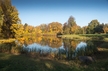 Аutumn trees round a pond