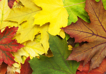 Mixture of Autumn leaves