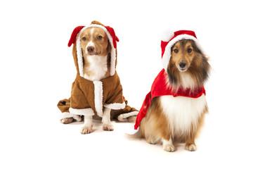 Two dogs in santa dress