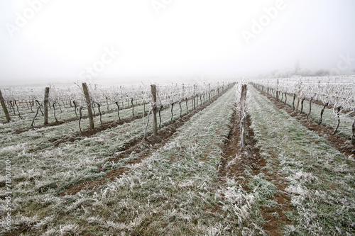 Keuken foto achterwand Wijngaard Vineyard on a cold foggy winter's day