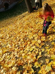 People collect autumn leaves in a city park