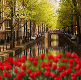 Amsterdam with green canal in the downtown, Holland