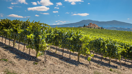Rows of a Vineyard in a Tuscany Winery Estate