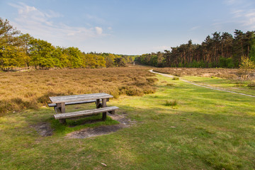 Veluwe Nature near Schaarsbergen