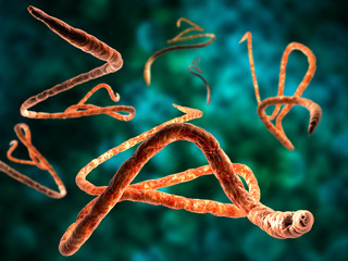 3d render, illustration of Ebola virus, Microscopic view.