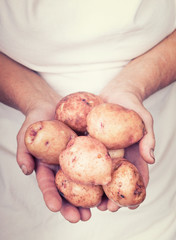 Elderly hands holding organic fresh potatoes with vintage style