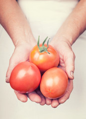 Elderly hands holding organic fresh tomatoes with vintage style