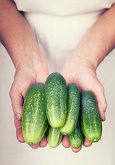 Elderly hands holding organic fresh cucumber with vintage style