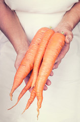 Elderly hands holding organic fresh carots with vintage style