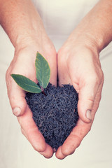 Elderly hands holding organic black tea with leaf with vintage s