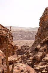 The very deep canyons with an dry tree in Petra, Jordan