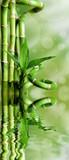 Bambusy na zielonym tle