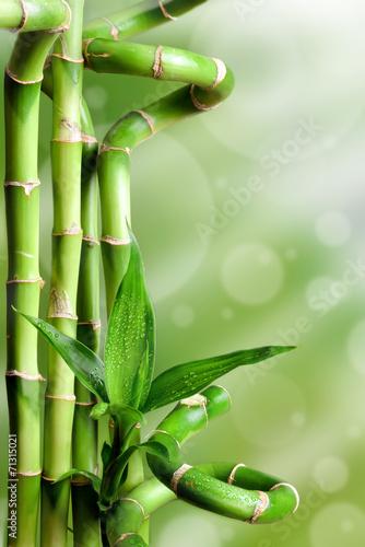 Obraz Bambusy na zielonym tle