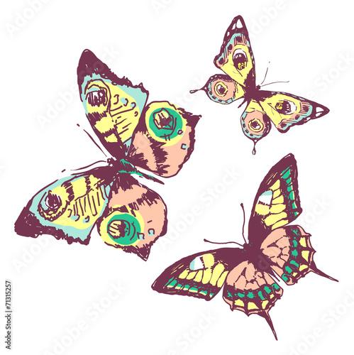 canvas print picture butterflies design