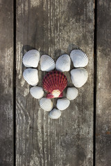 Heart made of sea shells