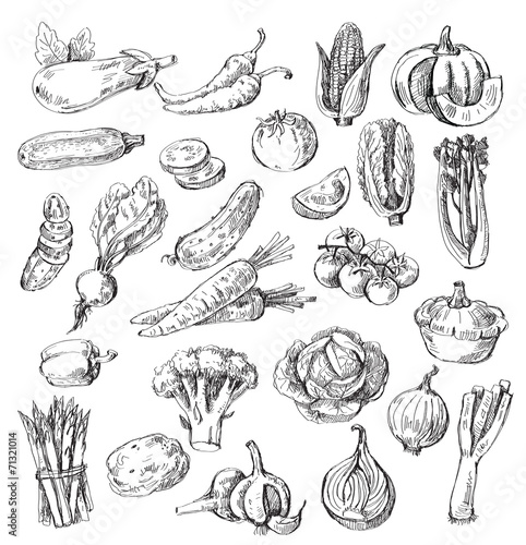 hand drawn vegetable - 71321014