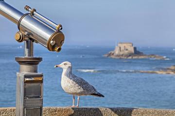 Sea bird near of tourist telescope in Saint-Malo, France
