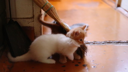 cute  kittens playing indoor