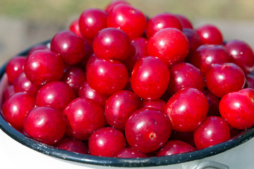 Appetizing red cherries on a green background