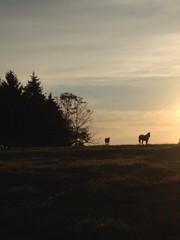 sunrise in field