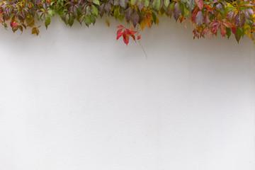 Mauer mit Herbstblätter