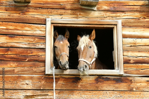 pferdestall - 71330010