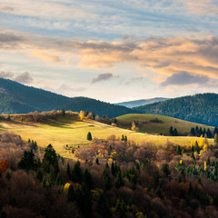 pine trees near valley in mountains  on hillside under sky with