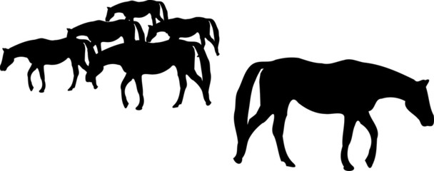 Silhouette of horse herd