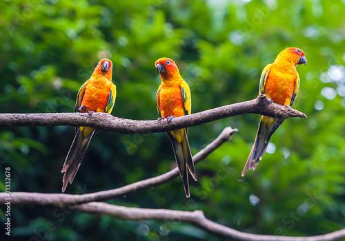 Papiers peints Toucan Exotic parrots sit on a branch, wildlife