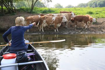 Kanuerlebnis mit Kühen