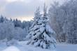 canvas print picture - winter landscape
