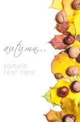 Autumn nature concept. Fall fruit and vegetables on wood.