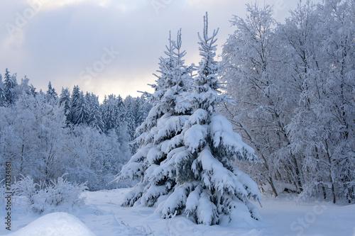 canvas print picture winter landscape