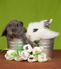 two little rabbit in a bucket and flowers