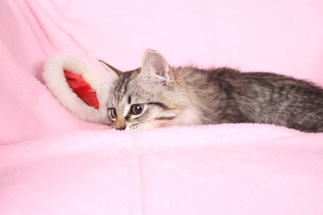 grey kitten and new year hubcap on a pink background