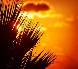 Palm silhouette over sunset