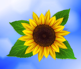 Vector sunflower with green leaves