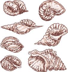 seashells sketch