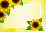 Sunflowers vector background for image and text - 71342419