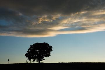 夕暮れの丘に立つ一本の木