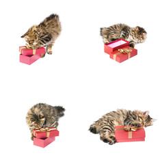 kitten about gift box