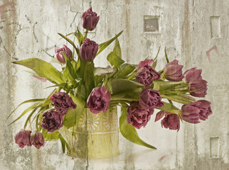 bouquet of fresh  purple  tulips .