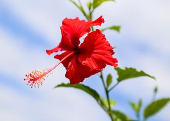 the flowers in chitwan,Nepal