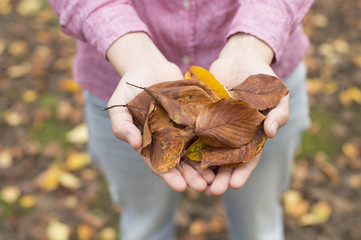 People who have both hands in the fallen leaves