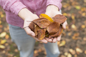 Woman have with both hands fallen leaves