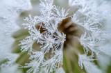 Dandelion and dew drops - 71347808