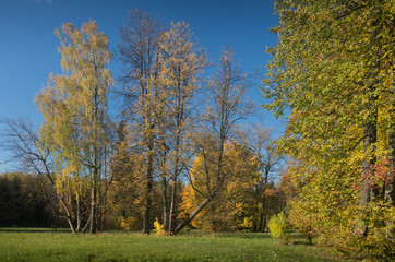 Group of autumn trees on a meadow in a sunny day