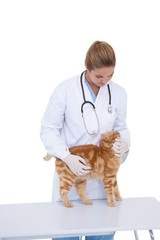 Vet giving a cat a check up