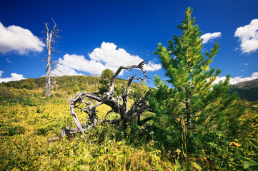 Beautiful mountain landscape. Altai, Russia