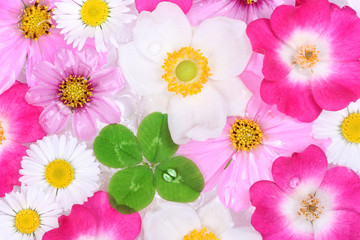 Background with flowers and 	four-leaf clover